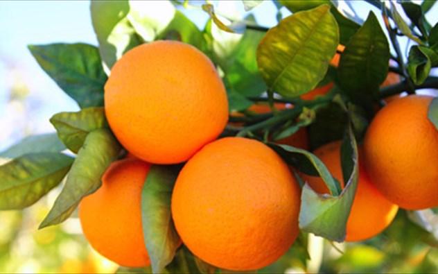 ta-diatrofika-ofeli-tou-portokaliou