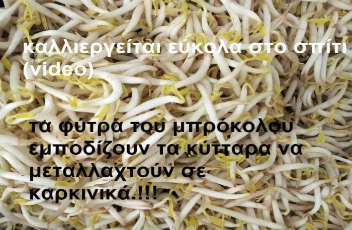 sporoi_fytra_diatrofi_ygeias_ypernoisis